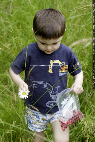 he found a daisy for rachel - MG 5150.JPG