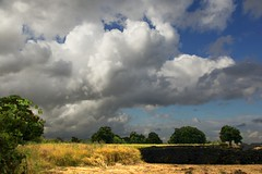 Storm Clouds and Sunshine. (algo) Tags: uk blue trees light england sky clouds gold topf50 shadows topv999 harvest topv222 shade algo thechilterns chilternhills 50f searchthebestnew
