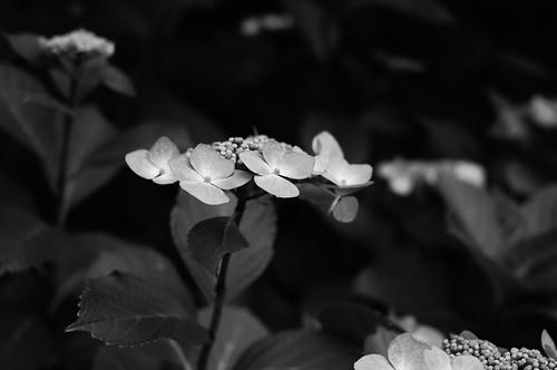 2011.07.13(R0012867_50mm_Silver Efex