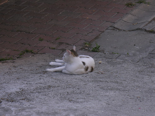 Istanbul cats morning