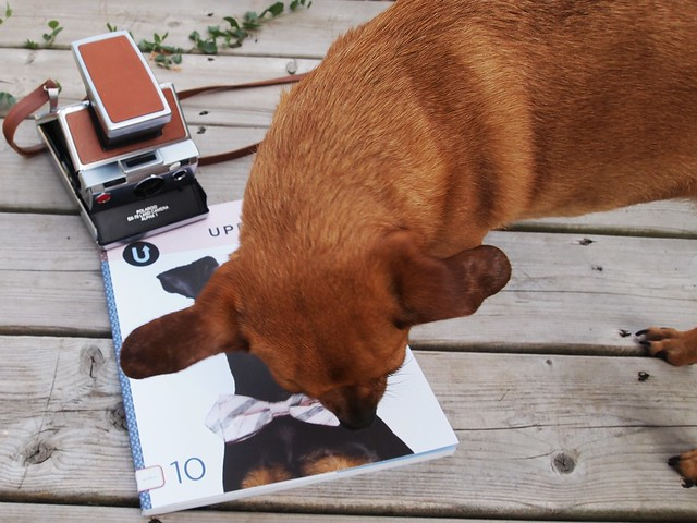 Uppercase + dog + SX70