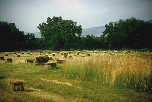 Photo - Hay Bales