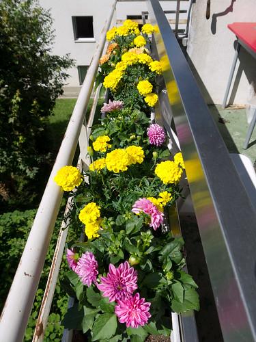 My Plants 8.jpg