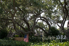 Quality Tree Service of Sarasota Trimming Oak Trees in Sarasota, Florida (Quality Tree Service of Sarasota) Tags: venice plant tree landscape concrete design dangerous oak florida crane landscaping quality lawn large commercial repair installation maintenance hauling cutting service sarasota walls trimming removal residential privacy condominium planting sod pruning osprey mulch sprinklers removals nokomis fertilization
