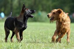 Kamiel & Doggy (Wicked posse) Tags: doggy kamiel