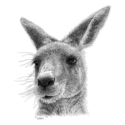 how to draw a realistic kangaroo