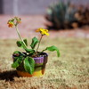 Just another potted plant (kevin dooley) Tags: favorite brown plant hot flower 120 grass leaves wow mediumformat photography photo leaf interesting fantastic backyard flickr dof image very good awesome lawn picture free award superior dry pic super best pot more most velvia pottedplant burnt photograph drought creativecommons winner excellent fujifilm much incredible better f28 exciting winning kowa stockphotography browngrass phenomenal deadgrass drygrass kowa66 burntgrass kowasuper66 freeforuse drylawn super66 deadlawn burntlawn