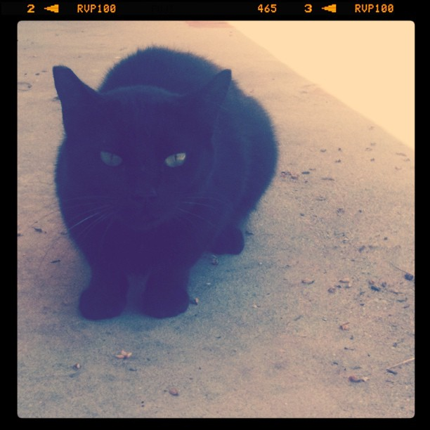 Pretty kitty ...stray cat calming down. A name is in the works.