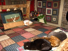 Cat Nap Time!!! (Jodi:)) Tags: cats cute nap sweet adorable kitty kitties