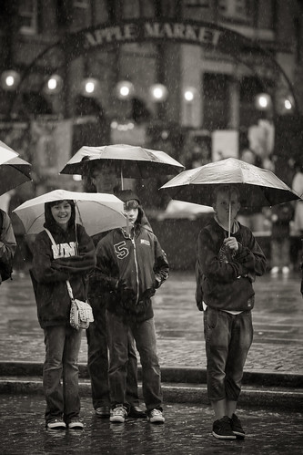558/1000 - Raining in Apple Market by Mark Carline