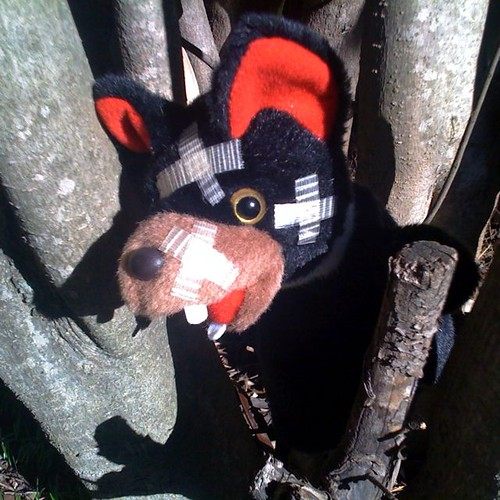 Tasmanian devil (#23)