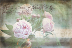 Dreamy flowers (Anastasias photography) Tags: textures tqp
