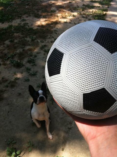 New soccer ball for Egon!