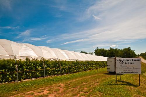 Vital berry farm