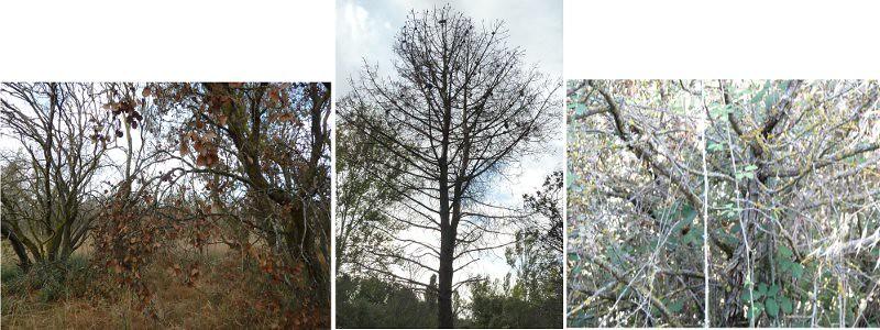 encinas, pinos y todo tipo de arbustos se secan