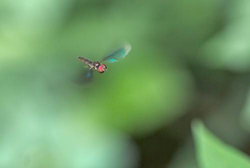 insecto volador by alopez2006