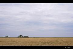 It's gold! (Just me, Aline) Tags: holland netherlands farm nederland farmland groningen boerderij graanveld