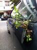 Extreme Guerilla Gardening??? (Antonia Schulz) Tags: auto street city urban berlin car germany gardening strasse cité pflanze urbana grün rue prenzlauerberg guerilla aktion 2011 strase tankdeckel öffentlicherraum