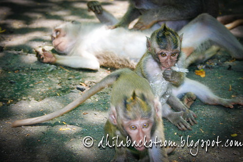 Indonesia_2011-9.jpg