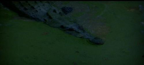thin red 1 croc