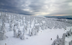 Small runs of Zao (Marquisde) Tags: trees winter sky mountain snow ski japan clouds landscape scenery fake resort 7d zao tiltshift snowmonsters  juhyo tiltshiftmaker canonefs1585mmisusm
