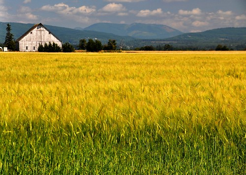 08/07/11 Wheat by roswellsgirl