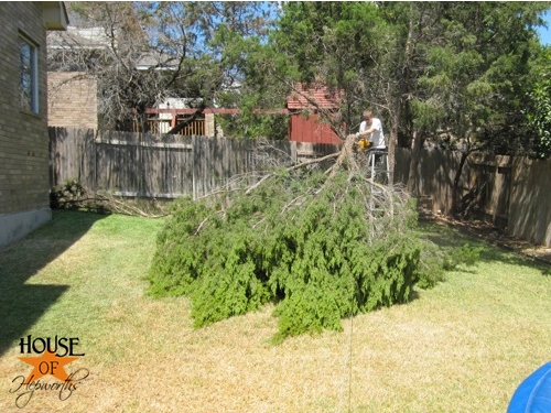 yard_work_tree_cutting_07