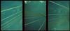somewhere in france #19 viaduc de millau (douweplukkel) Tags: bridge france pen xpro olympus oldschool crossprocessing kit olympuspen rapid millau viaduc mimoa c41 viaducdemillau ee2 olympuspenee2 tetenal