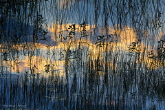(Bharat Baswani) Tags: blue abstract color colour reflection water contrast bharat baswani