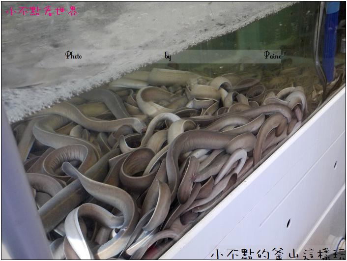 釜山炒黏鰻 (13).jpg