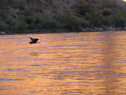 IMG_3892_Heron_Colorado_River_Float_Trip_in_Glen_Canyon