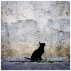 Menilmontant's streets, 19:15 pm (basse def) Tags: cats streets animals tags walls