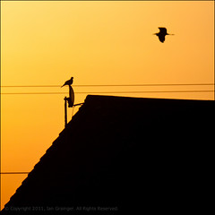 Early Risers (*ian*) Tags: morning sky orange building bird heron nature silhouette sunrise square flying blog wire dish pigeon wildlife satellite feather perched favourite avian satellitedish feathered feathery bigemrg doublyniceshot jul2011blog