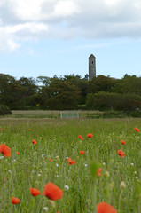 Poppy Field Donabate (S.Wieler) Tags: tower poppyfield donabate