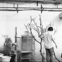 branches, along the Suzhou Creek (cerentang) Tags: she show life china street city light portrait bw white man black blur color art history mamiya film girl night pencil paper point landscape photography grey one mirror crazy asia poetry day phone view shanghai time who earth expression horizon hey culture some problem where human memory question confused only present forms around value he distance past emotions tonight issue serie channel noisy feelings existence underage voices suzhoucreek condition 2011 cerentang