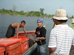 IMG_0173 (RarePlanet) Tags: wildlife reserve credit aceh singkil yel photo fransisca kualabaru rundeng bogor1 rawa sumatra ariantiningsih