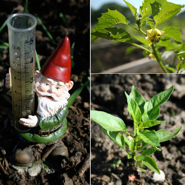 gnome_peppers