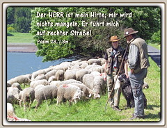 Hirte oder Metzger / Shepherd or butcher (Martin Volpert) Tags: christ god faith bible christianity metzger bibel biblia schafe gott hirten glaube bijbel glauben psalm23 christentum jesuschristus bibelvers  bibelverskarte mavo43