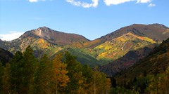 WASATCH AUTUMN COLORS by Aquila-chrysaetos, on Flickr