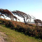 prevailing wind thumbnail