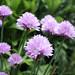 purplehoneys