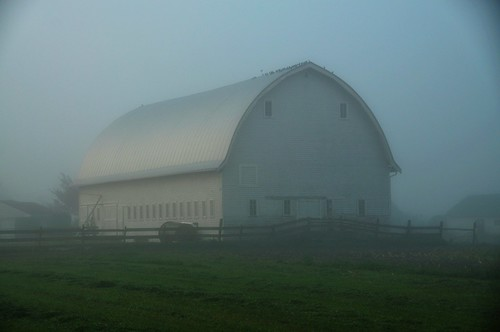 10-13-11 Foggy Morning by roswellsgirl