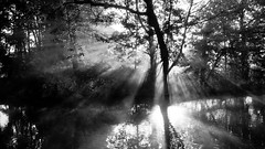 Morning Rays (James Trickey) Tags: morning trees light sunlight mist church nature water river landscape outdoors university christ scenic meadow oxford rays