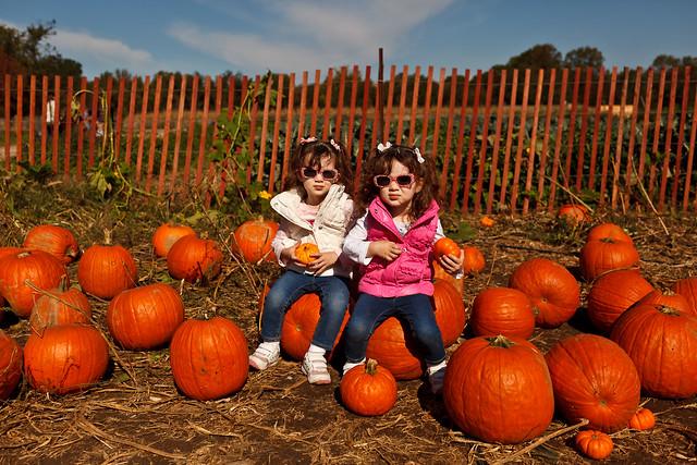 289/365 - October 16, 2011 - Picking Pumpkins