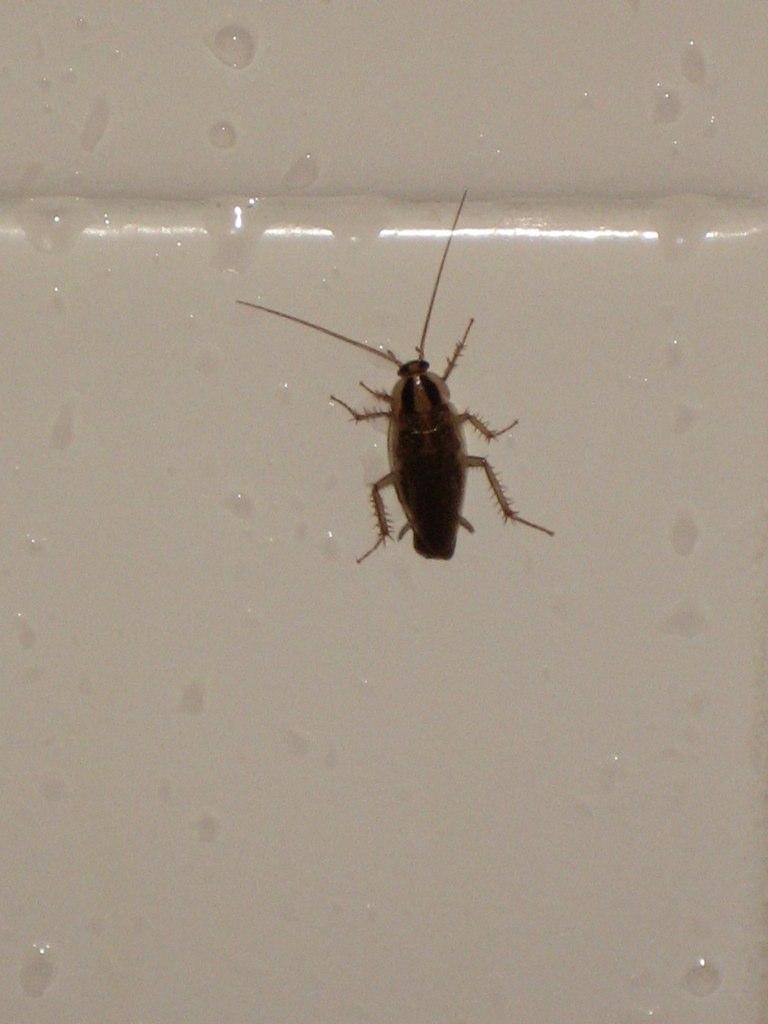 Less Blurry Roach