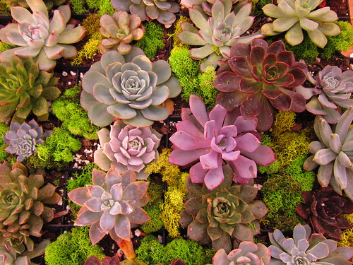 Succulents by moonlightbulb, on Flickr