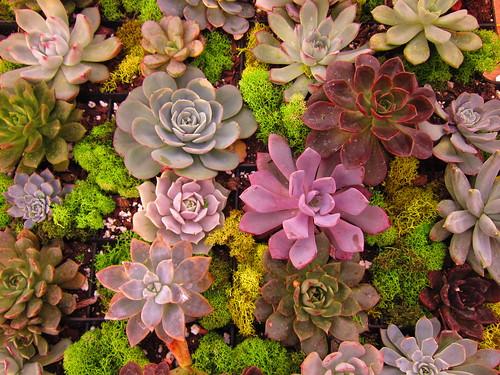 Succulents by moonlightbulb, on Flickr