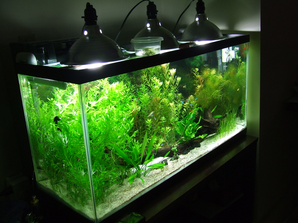My Inexpensive Cfl Light Solution The Planted Tank Forum