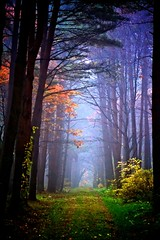 The Place I met you in my dreams (jasohill) Tags: world blue autumn light color fall nature japan forest canon landscape eos japanese rebel other fantastic place you tunnel fantasy dreams iwate backgrounds   met     hachimantai the  2011  50d jasohill i  mygearandme dblringexcellence lightartmasterpiece musictomyeyeslevel1 flickrstruereflection1 flickrstruereflection2 fotocompetitionfotocompetitionbronze