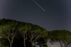 Shooting star (marcopics3000) Tags: stella sky star cielo albero pino notte stelle shootingstar stellato shoting cadente stellacadente